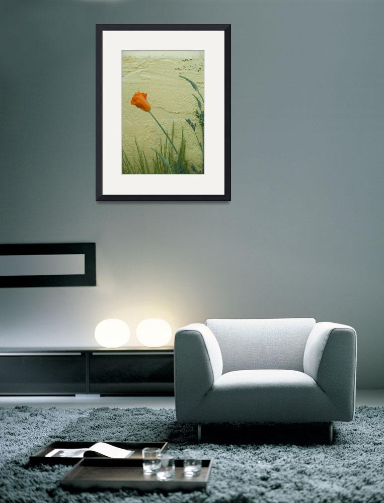 """""""Poppy against a Wall, Plymouth""""  (2009) by SederquistPhotography"""