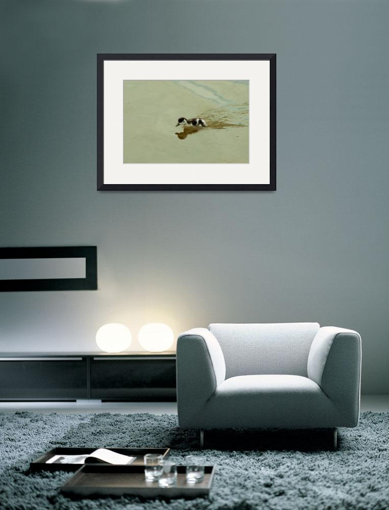 """""""Cute Duckling&quot  (2011) by ChrisBarry"""