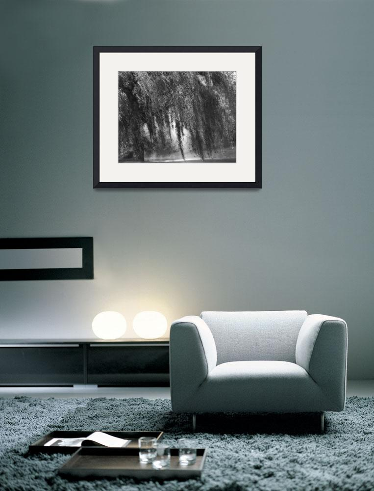 """""""B&W Weeping Willow Tree Landscape Nature Scene&quot  (2008) by PhotographsByCarolFAustin"""