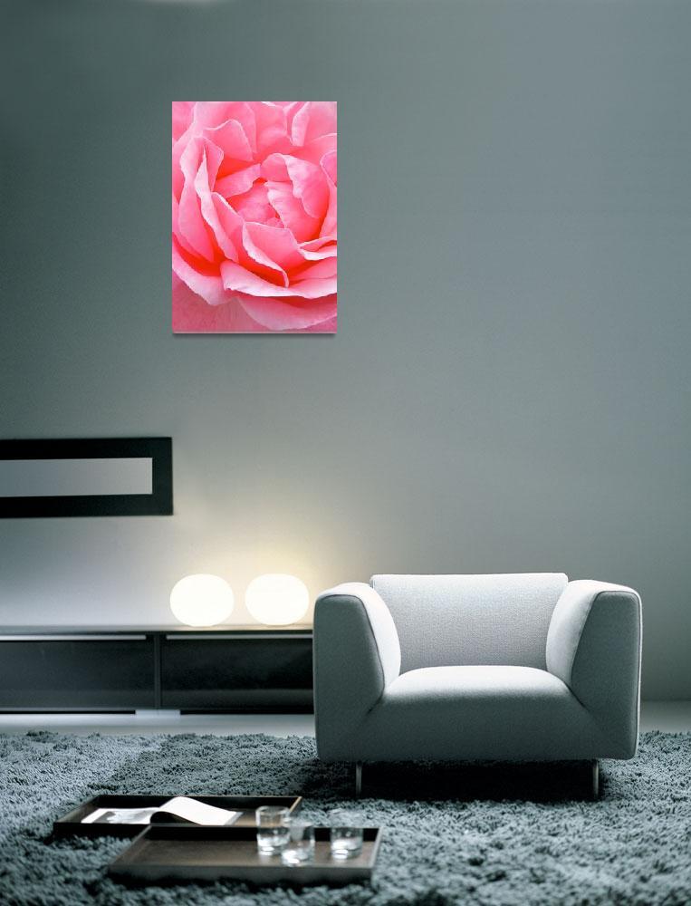 """""""Beautiful Rose""""  (2012) by joanielesnick"""