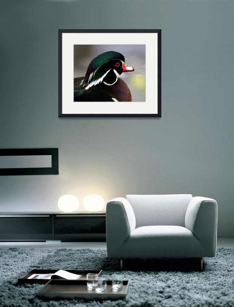 """""""Wood Duck&quot  by suddath"""