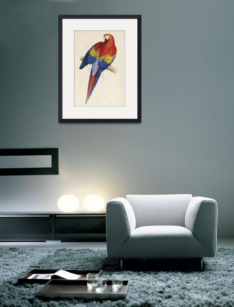 """""""Vintage Illustration of a Macaw Parrot (1832)""""  by Alleycatshirts"""