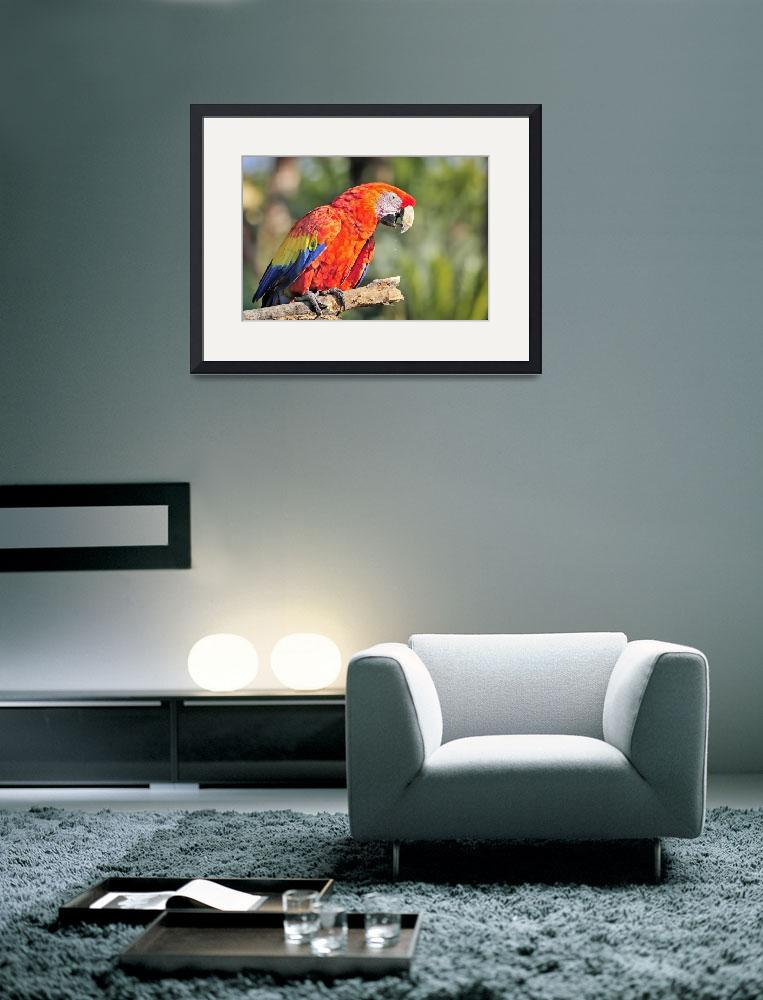 """""""WCC_0309- Red and Blue Macaw&quot  by photocell"""