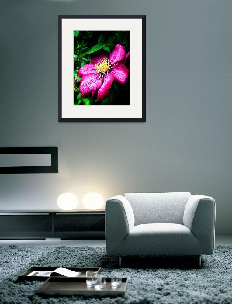 """""""Clematis&quot  (2011) by rewards4life"""