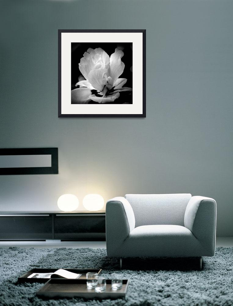 """""""Blossom In Black and White&quot  (2012) by bavosiphotoart"""