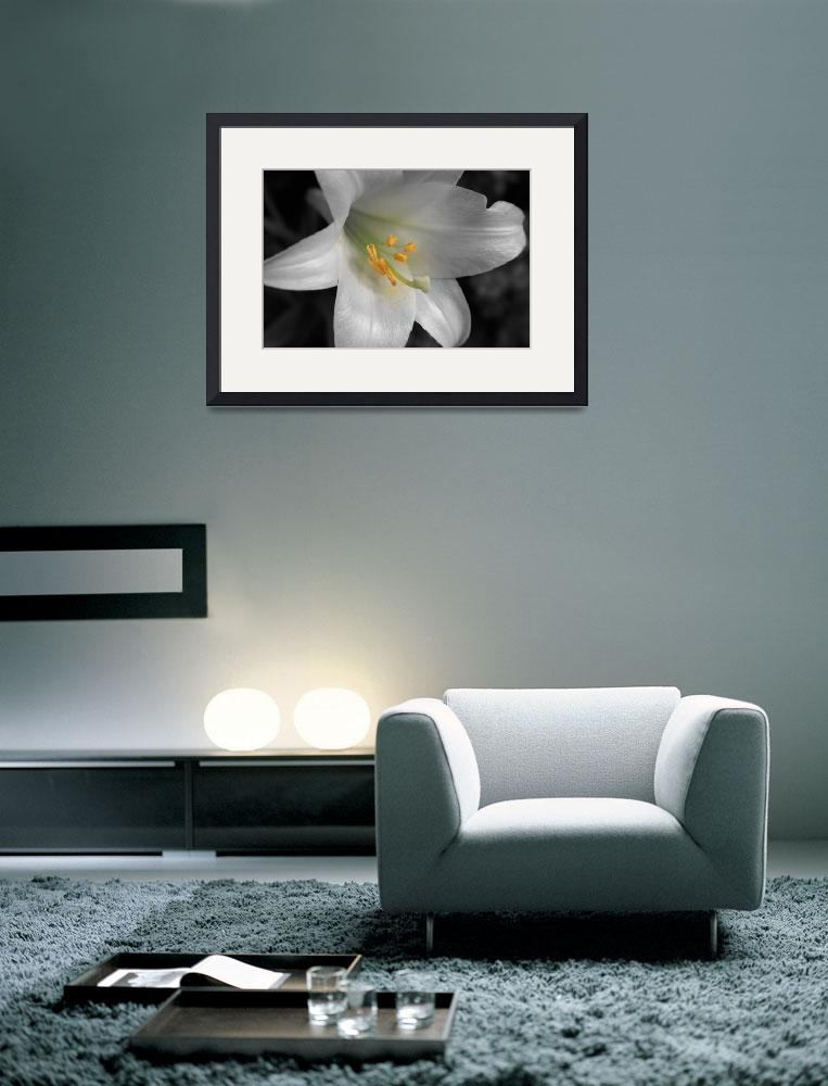 """""""White Lily Macro&quot  by jph"""