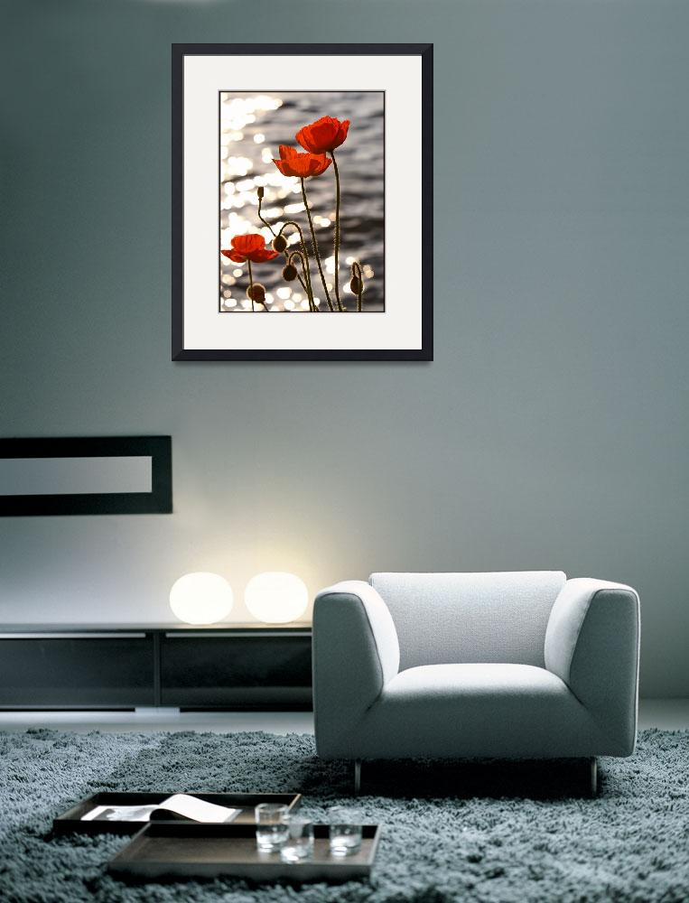 """""""Poppies in the Sunset on Lake Geneva&quot  (2007) by PearBiter"""