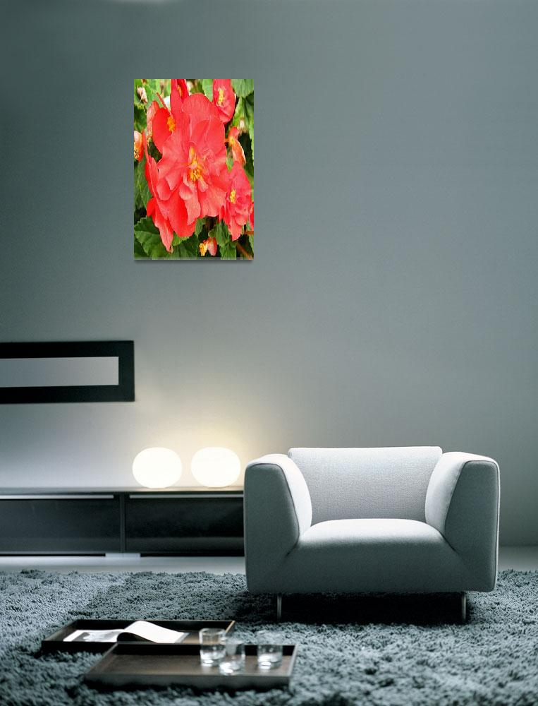 """""""Red Flower - Allen Graih Image&quot  (2007) by DelCalsione"""