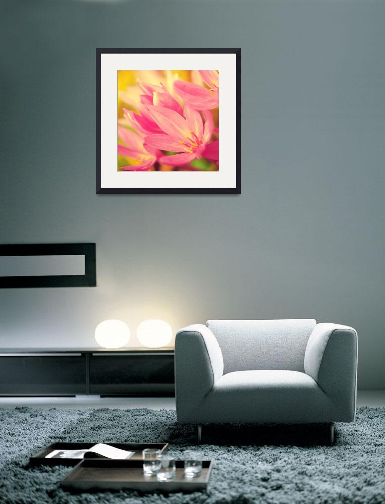 """""""Sweet Surrender Fine Art Floral Photography""""  (2010) by magnesina"""