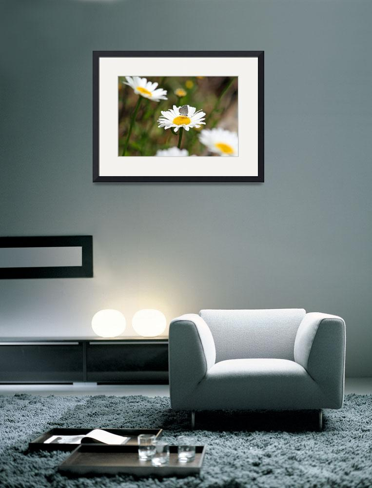"""Butterfly Eastern-Tailed Blue on Daisy""  (2012) by KsWorldArt"
