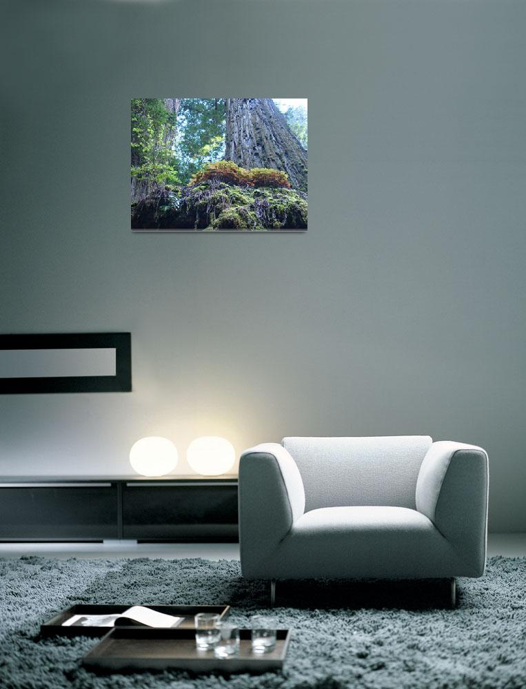 """Redwood Tree Forest art prints Redwoods&quot  (2012) by BasleeTroutman"