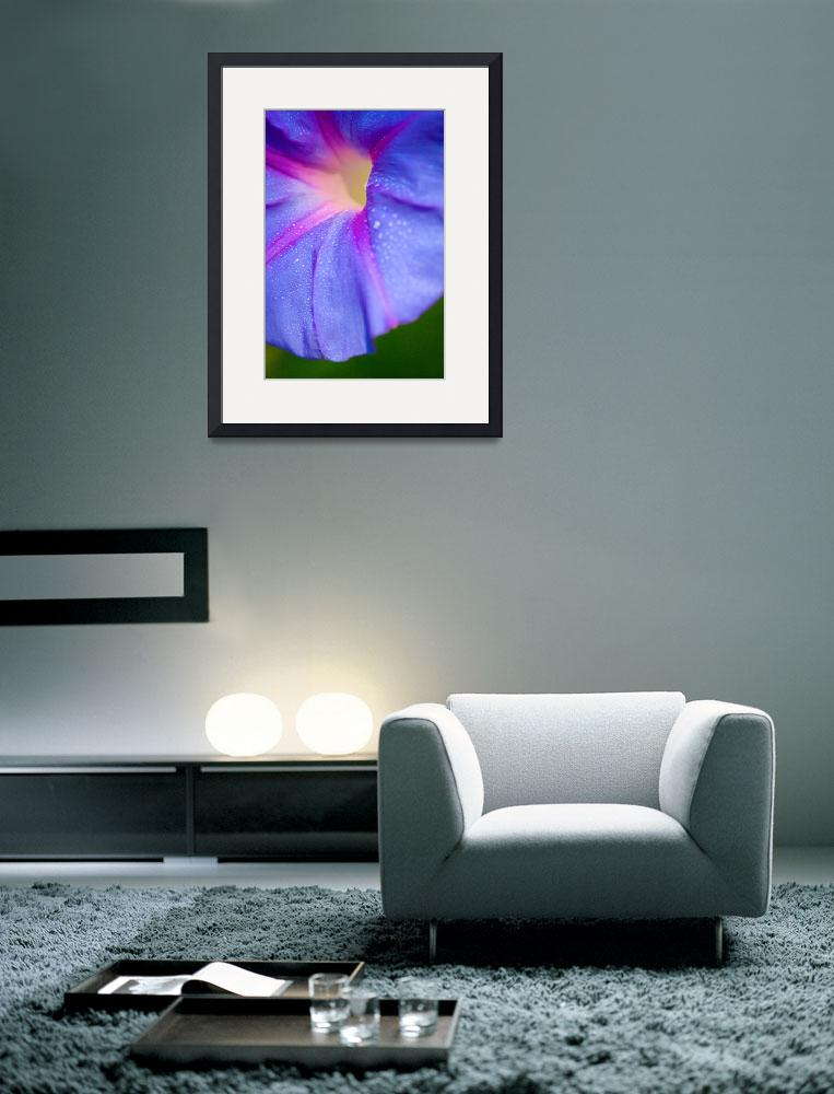 """""""Morning Glory&quot  (2005) by afstudio"""