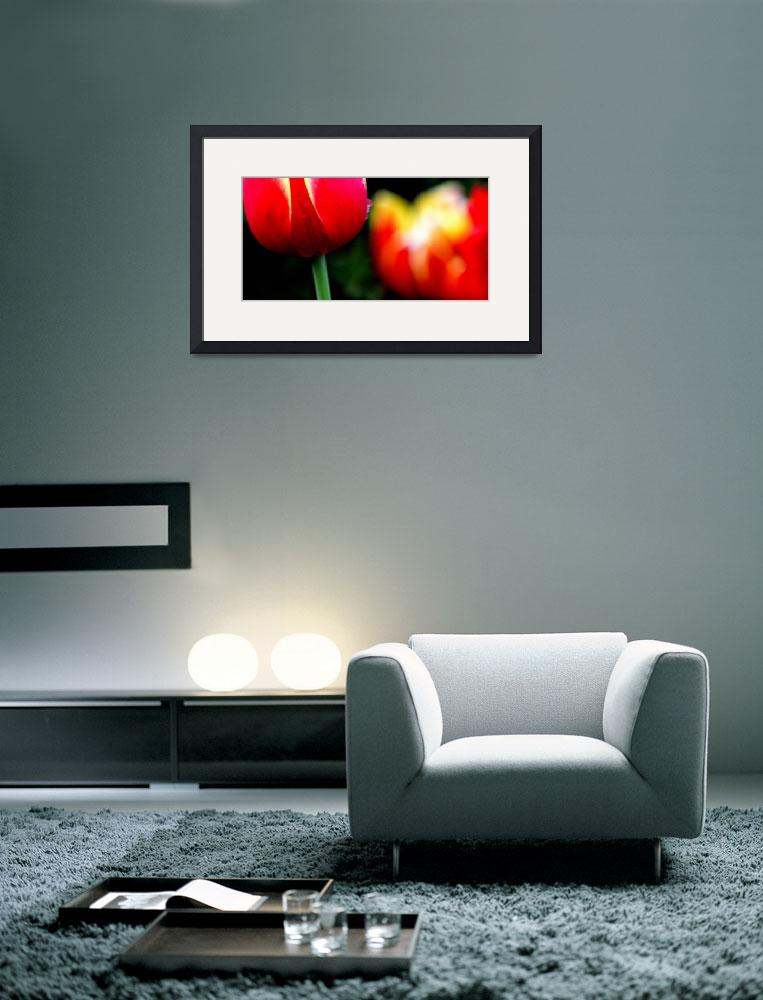 """""""Red Yellow Tulips&quot  (2014) by joanhan"""