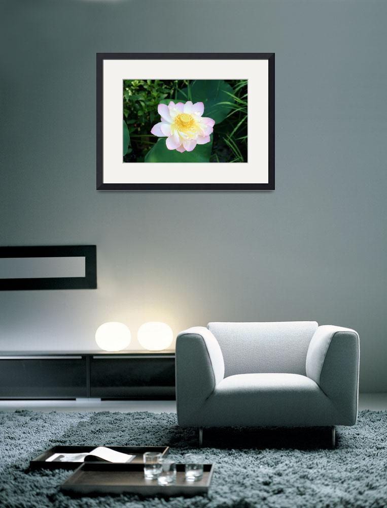 """""""Grand Water Lily&quot  by DorothyWilson"""