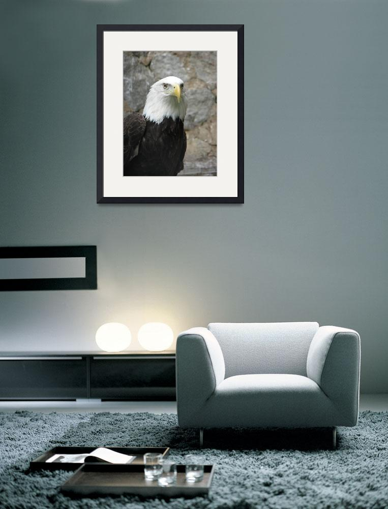 """Eagle eye&quot  (2009) by sghomedeco"