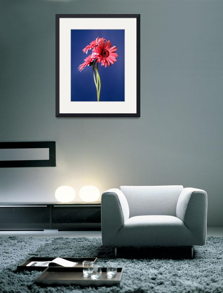 """Pink Gerbera Trio (Blue Background)""  (2006) by Infomages"