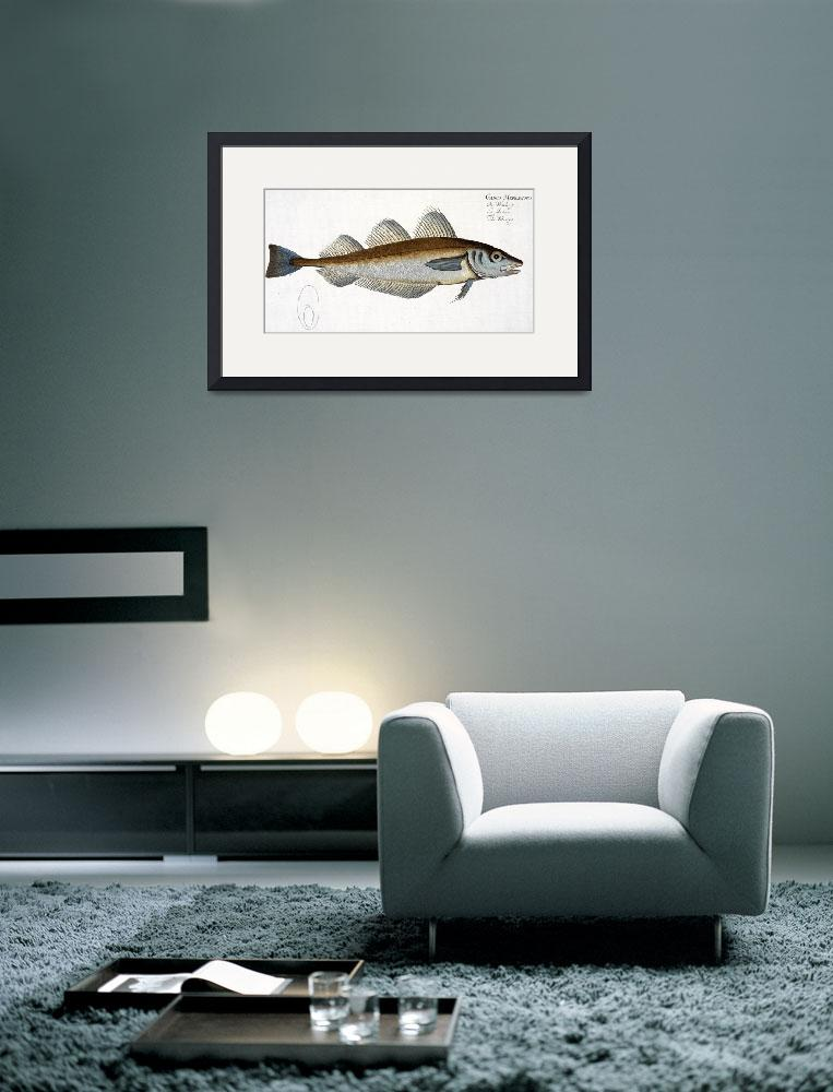 """""""Whiting (Gadus Merlangus)&quot  by fineartmasters"""