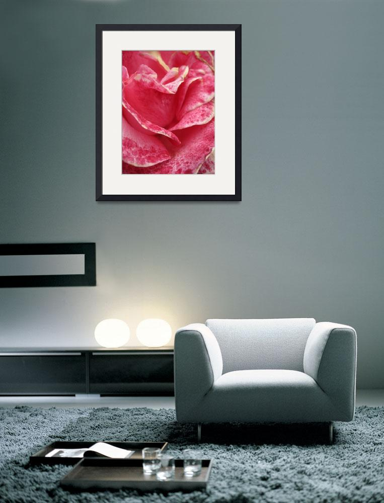 """""""Old Rose&quot  (2010) by jrotem"""