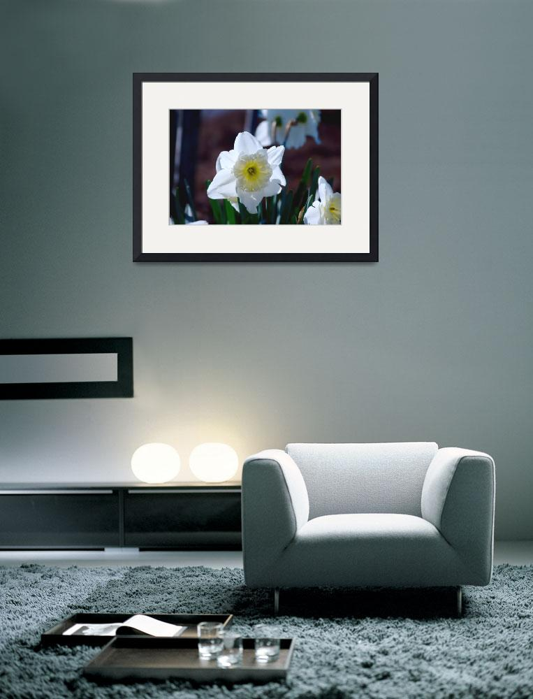 """""""Yellow and White Flower""""  (2010) by daveandrews"""