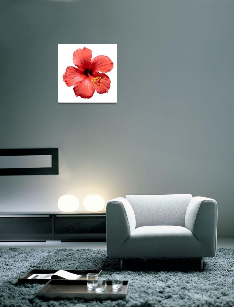 """Red Hibiscus flower""  (2009) by yio"