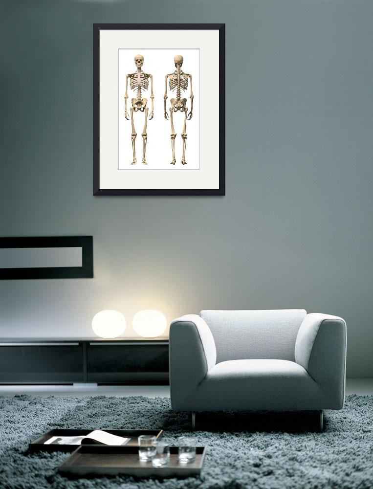 """""""Anatomy of male human skeleton, front view and bac&quot  by stocktrekimages"""
