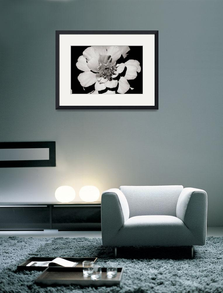 """""""Black & White Flower&quot  (2009) by crsphotography"""