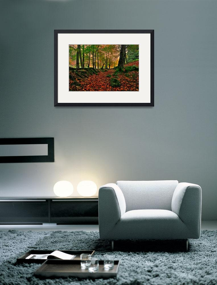 """""""Autumn Forest&quot  (2008) by harkness_john"""