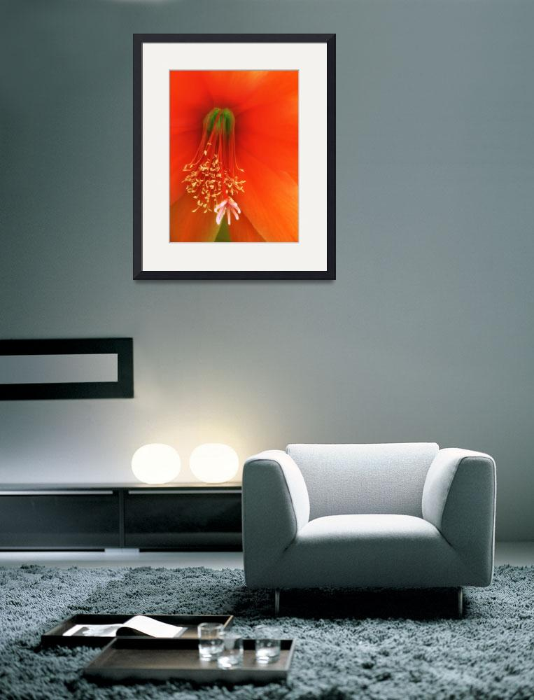 """""""Red Cactus Flower&quot  (2010) by cupoftea"""