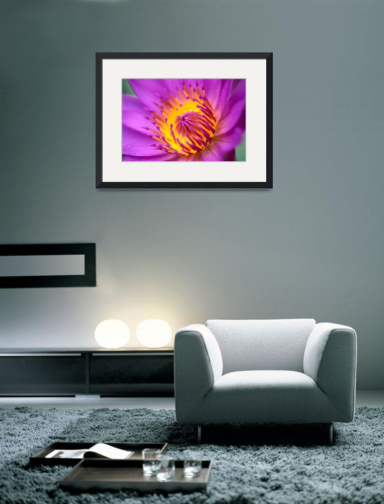 """""""Water Lily, Bright Pink With Yellow Center""""  by DesignPics"""