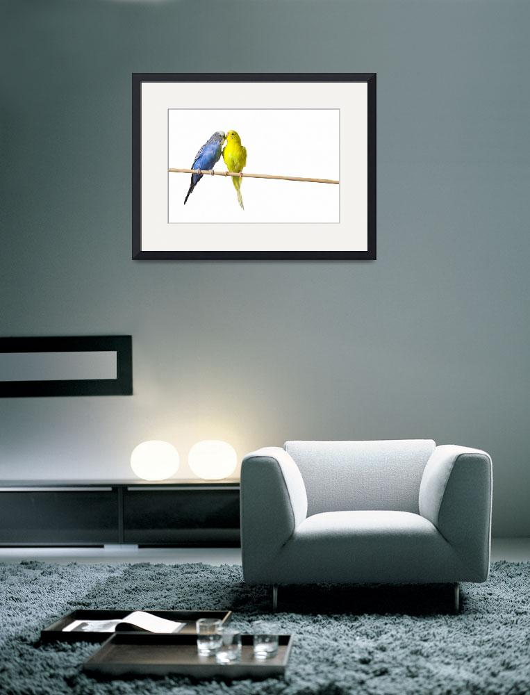 """""""Two Budgies On A Perch&quot  by DesignPics"""