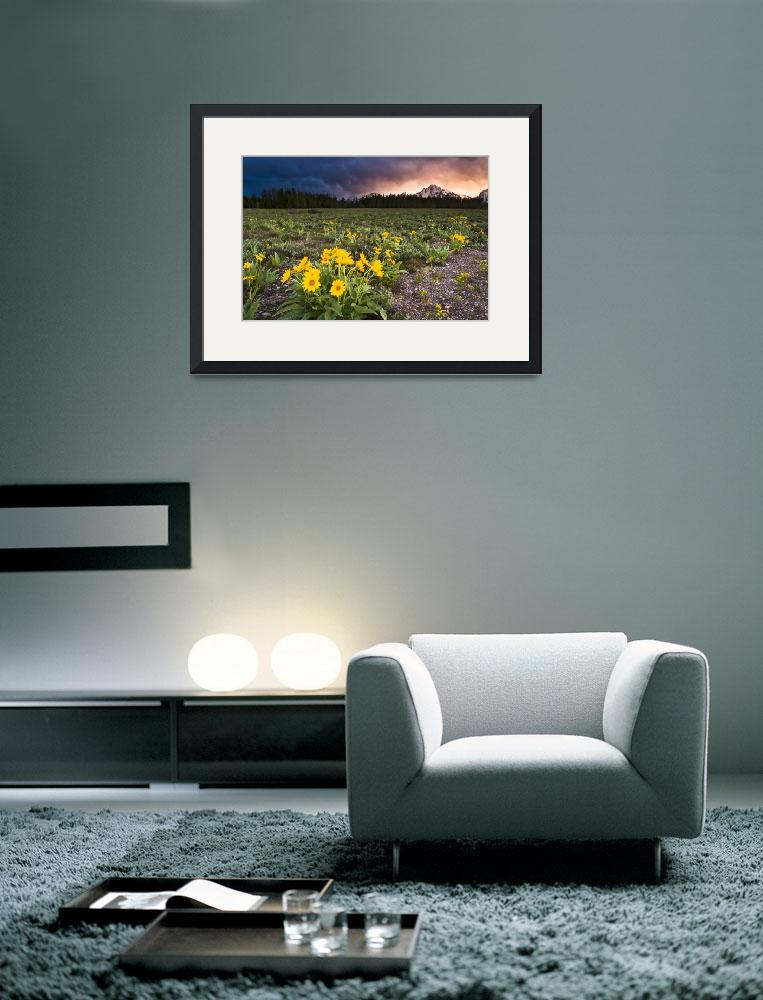 """Balsamroot Wildflowers and Stormy Sunset""  (2011) by cavaroc"
