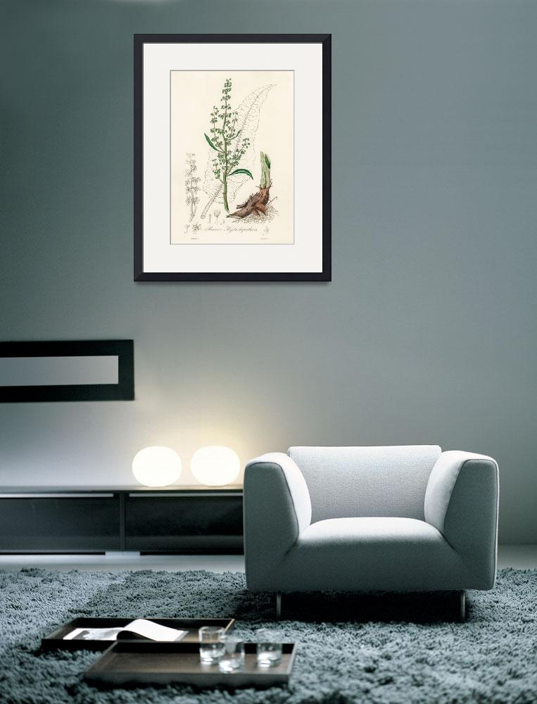 """""""Vintage Botanical Water dock&quot  by FineArtClassics"""