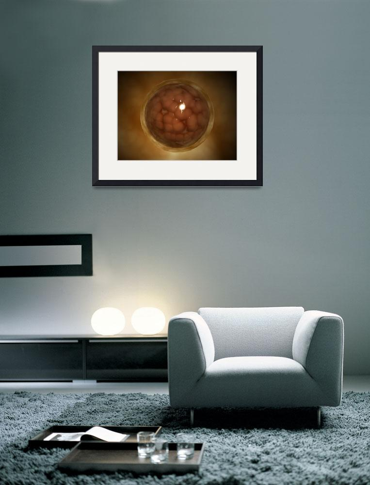 """""""Microscopic view of a blastula during pregnancy""""  by stocktrekimages"""