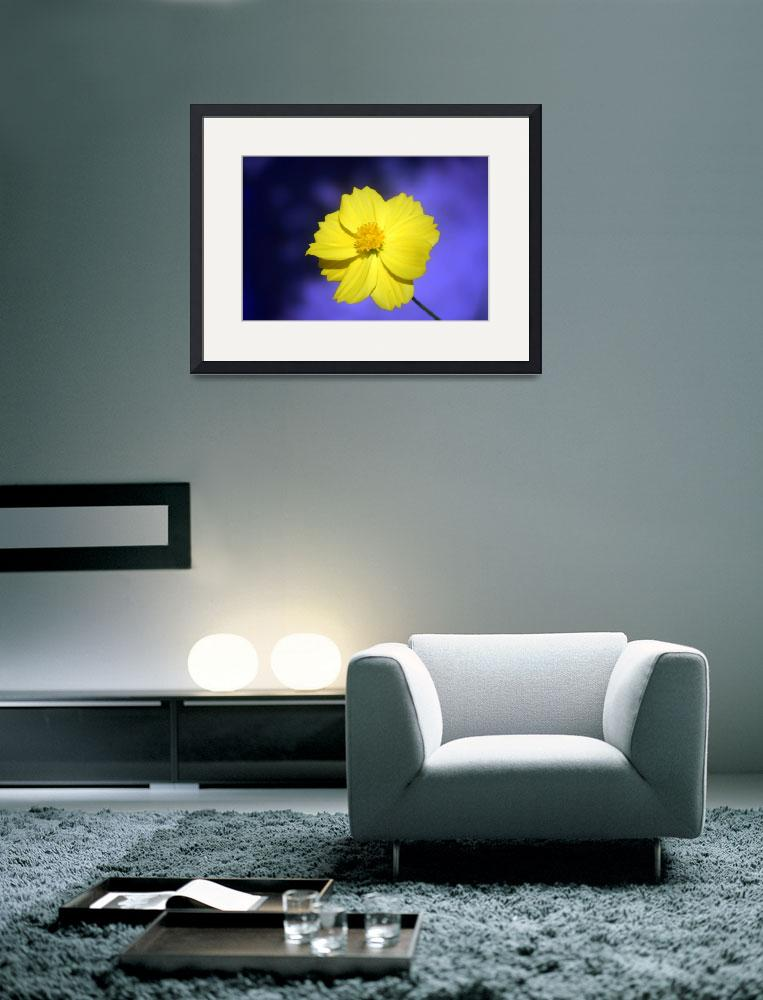 """""""flower&quot  (2008) by yossitc"""