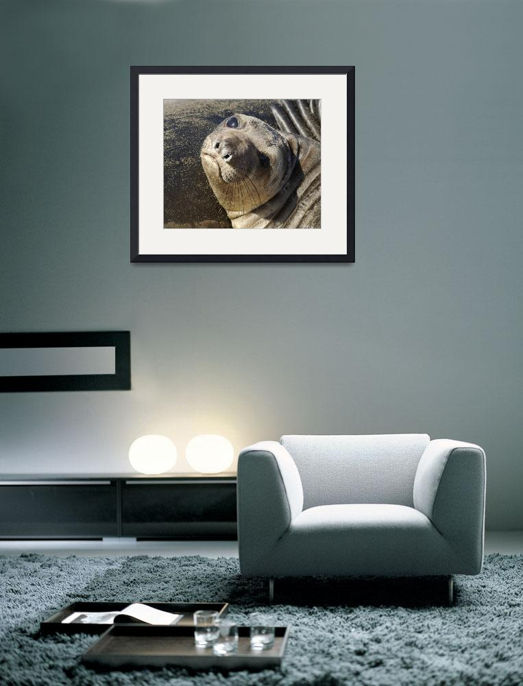 """""""Northern Elephant Seal pup&quot  by eyalna"""
