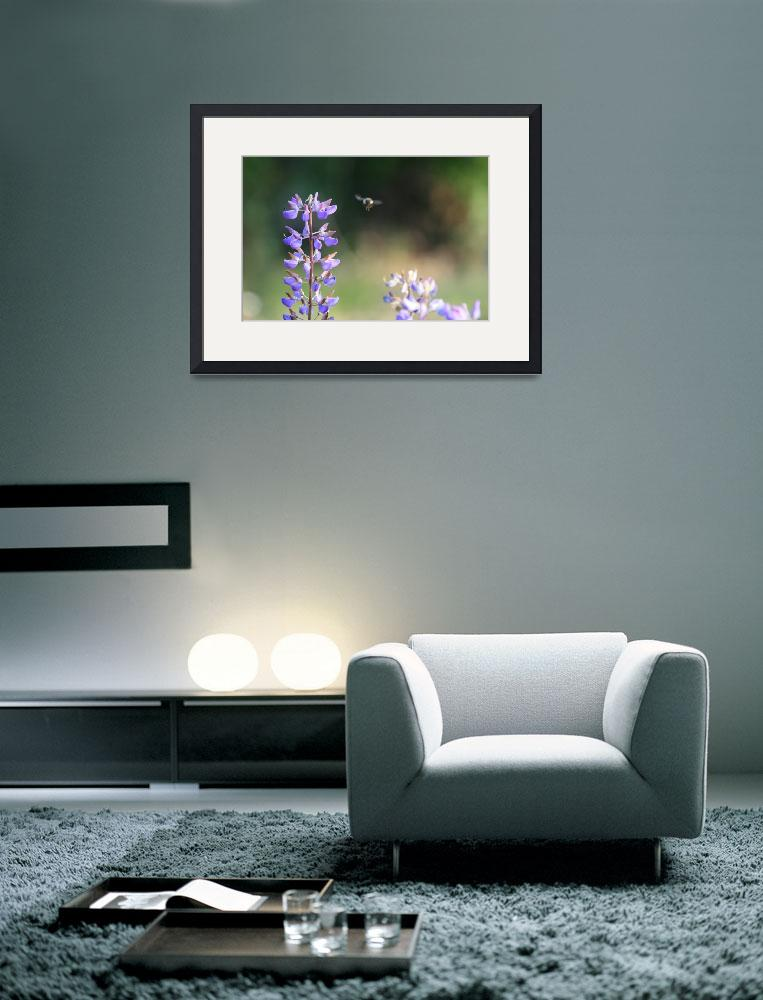 """""""Bumble Bee on Lupine&quot  (2007) by OutsideShooter"""