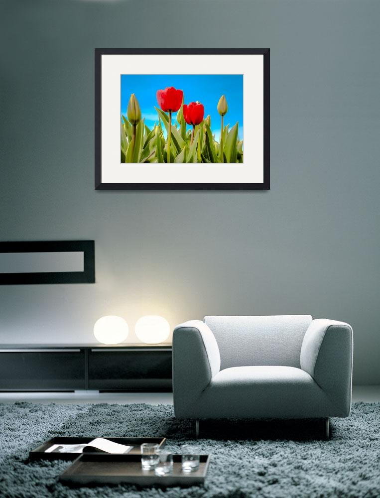 """Dutch Tulips""  (2014) by AlexFHiemstra"