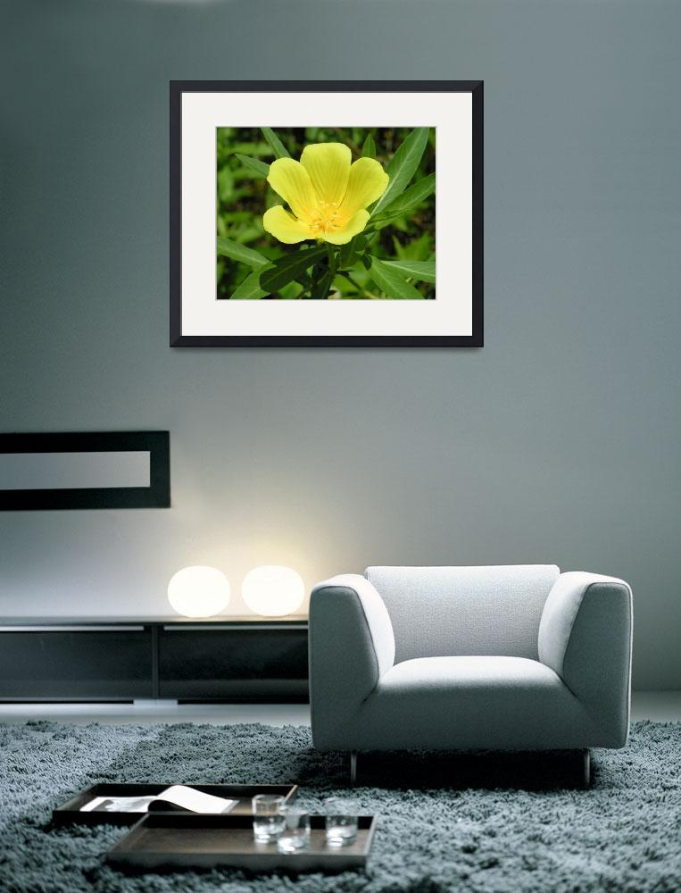 """""""Five Petal Yellow Flower&quot  (2007) by rderder"""