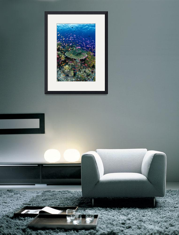 """Fiji, Hard Coral Reef Scene With School Lyretail A""  by DesignPics"