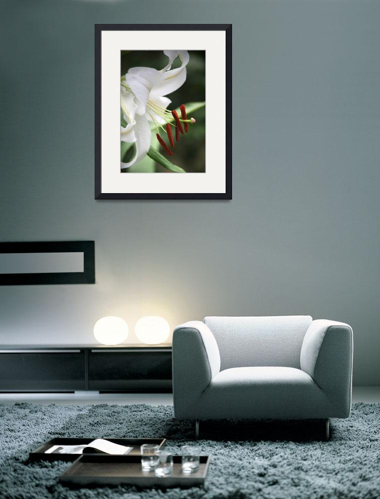 """""""White Lily&quot  (2008) by MsSnuffy"""