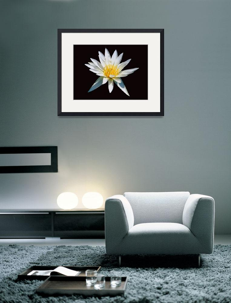 """""""Elegant White Water Lily&quot  (2010) by George_Oze"""
