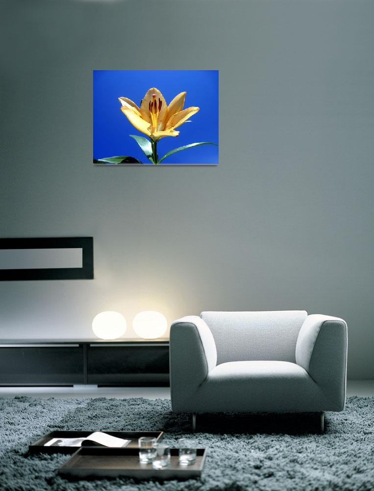 """Yellow LIly""  (2012) by johnscanvassprints"
