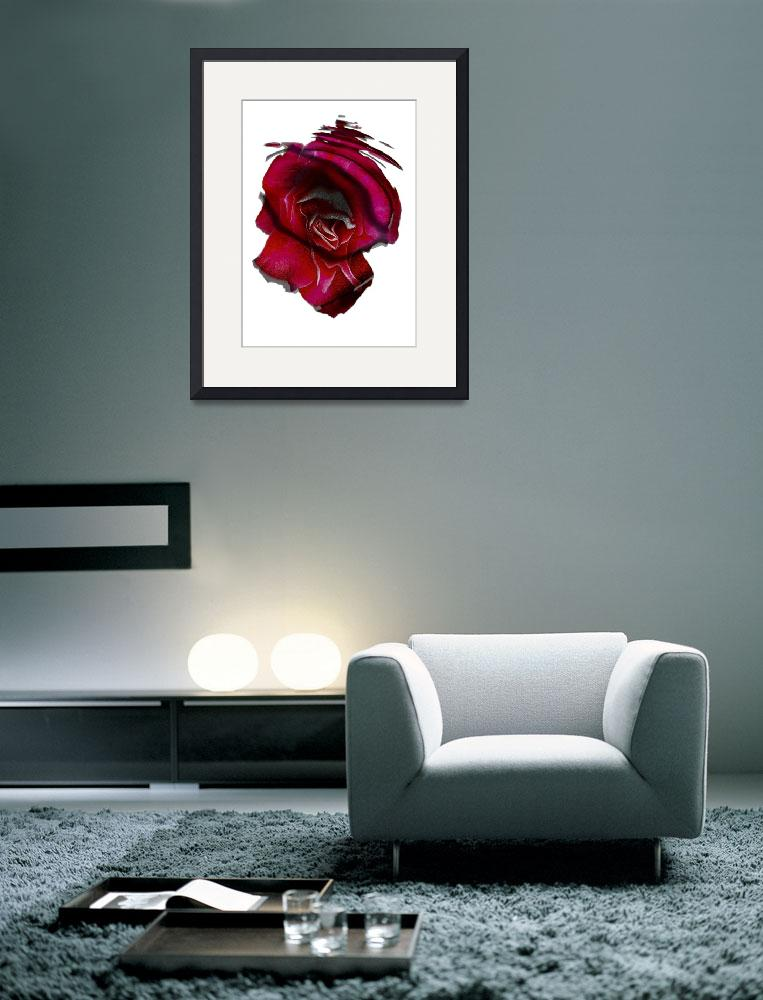 """""""Dream of the Red Rose""""  (2008) by garlanddunston"""