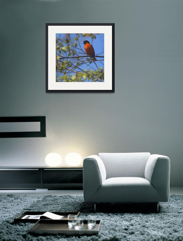 """Baltimore Oriole with Blue Sky Square Format&quot  (2013) by KsWorldArt"