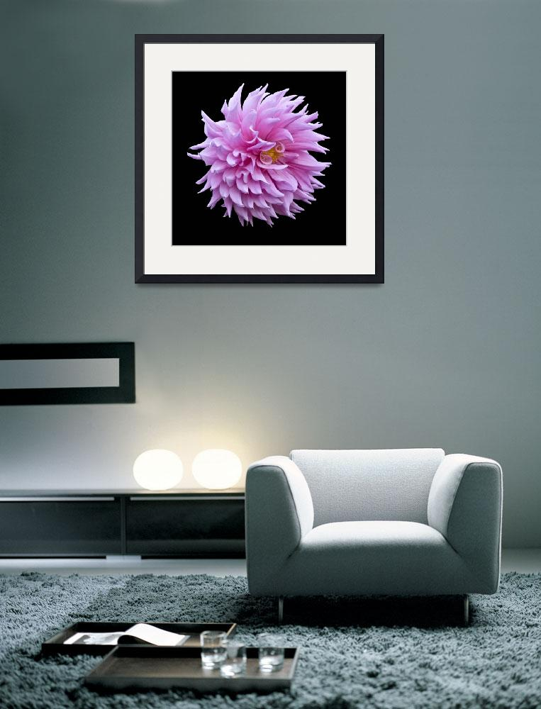 """Pink Dahlia Ball""  (2009) by RussMartinPhotography"