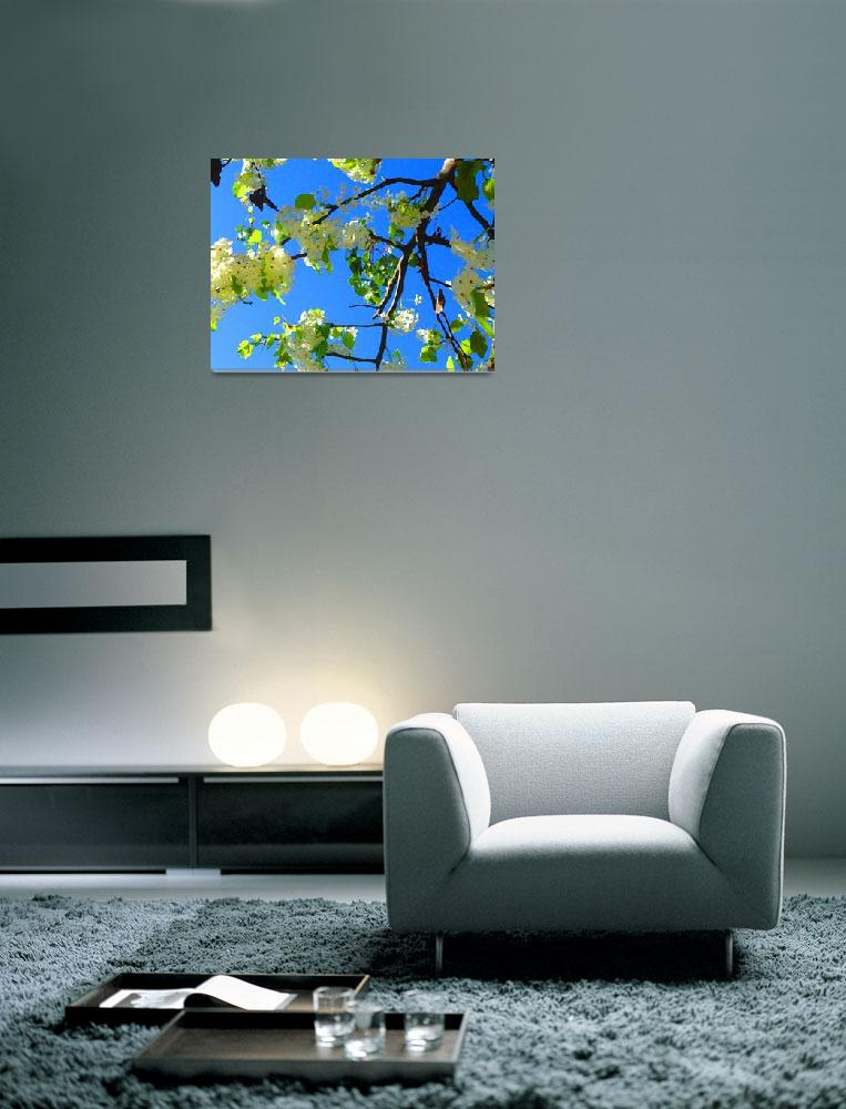 """""""White Tree Blossoms&quot  (2009) by AmyVangsgard"""