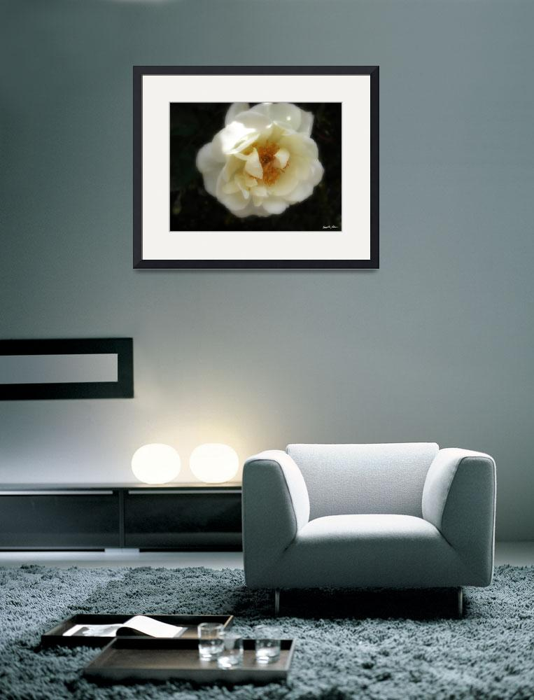 """Old Fashioned White Rose 1 Inspiration&quot  (2010) by ChristopherInMexico"