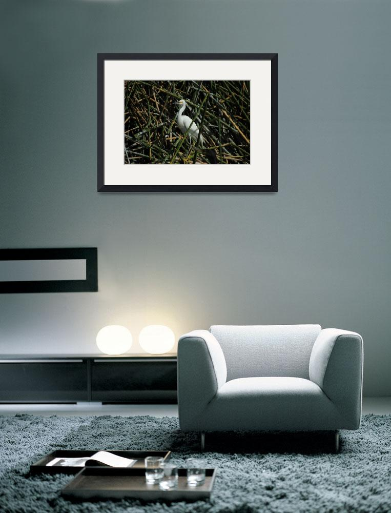 """""""Snowy Egret in Reeds in a Lake""""  (2016) by rhamm"""