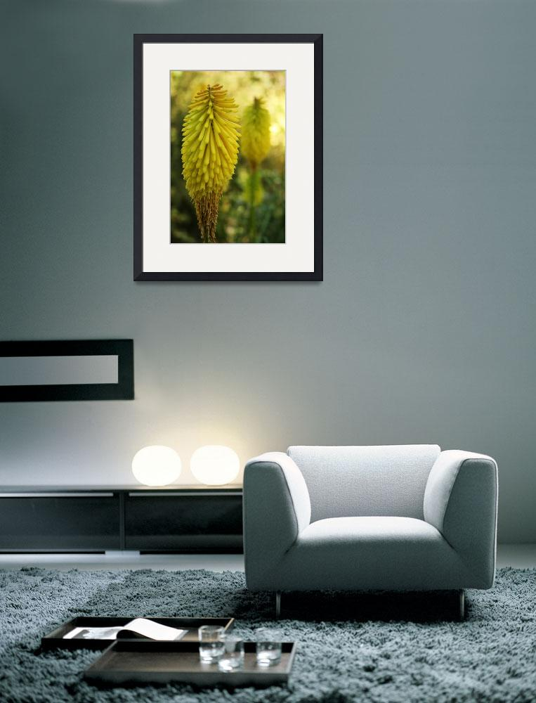 """""""Torch Lily&quot  (2008) by BarbaraBrownPhotography"""