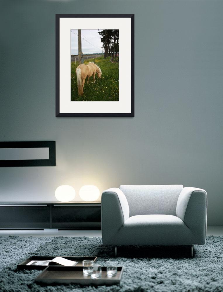 """Golden Horse 1&quot  (2009) by dmarshall"